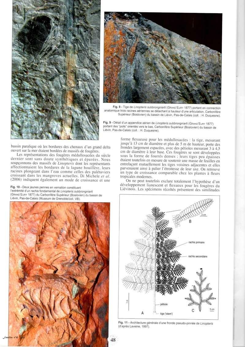 Trigonocarpus  Pachytesta  Hexagonocarpus  Img00610
