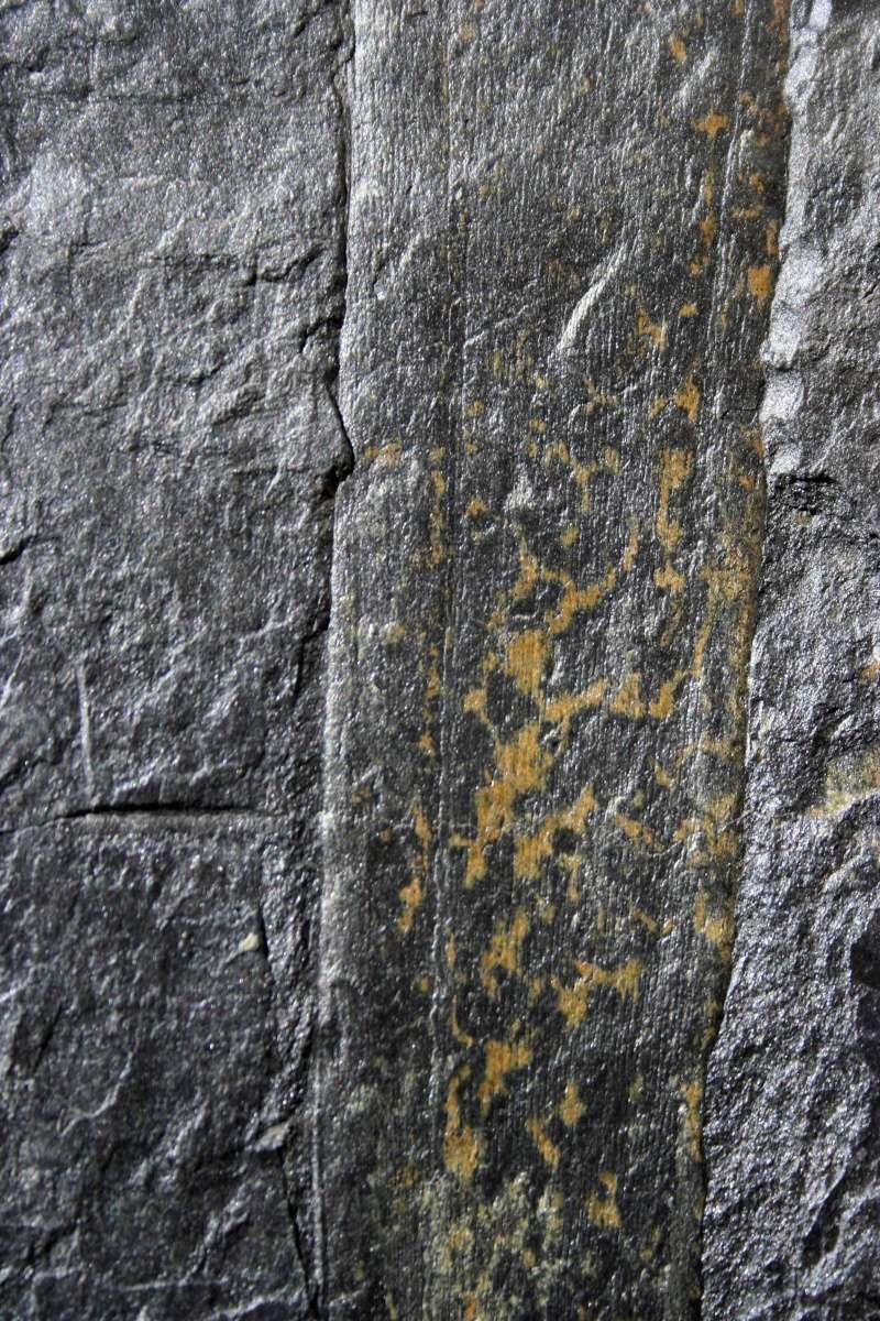 Flore Carbonifère des Alpes Françaises part 1 - Page 2 Img_2812