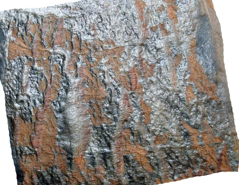 Flore Carbonifère des Alpes Françaises part 1 - Page 2 Img_3121