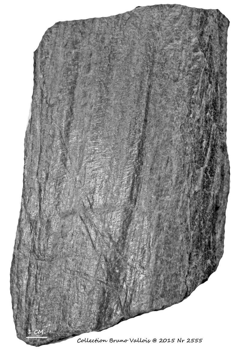 Flore Carbonifère des Alpes Françaises part 1 - Page 2 Img_3128