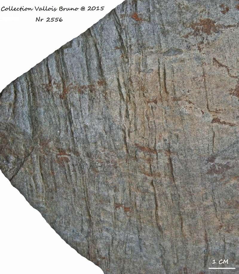 Flore Carbonifère des Alpes Françaises part 1 - Page 2 Img_3213