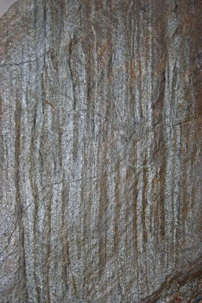 Flore Carbonifère des Alpes Françaises part 1 - Page 2 Img_3216