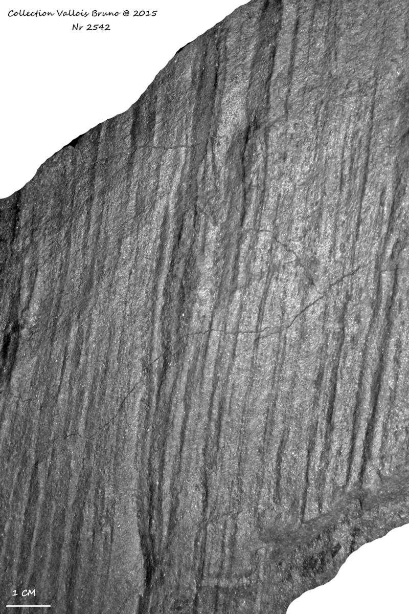 Flore Carbonifère des Alpes Françaises part 1 - Page 2 Img_3217