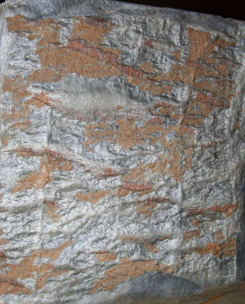 Flore Carbonifère des Alpes Françaises part 1 - Page 2 Img_3224