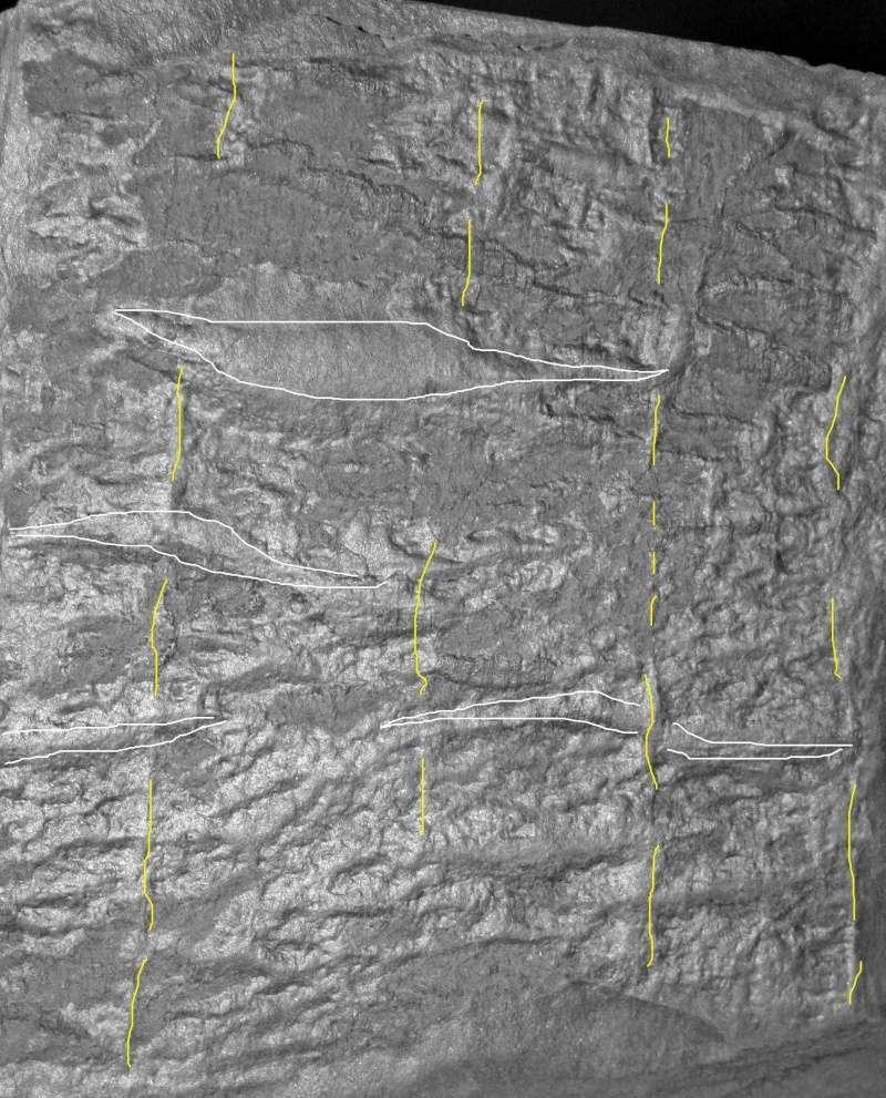 Flore Carbonifère des Alpes Françaises part 1 - Page 2 Img_3226