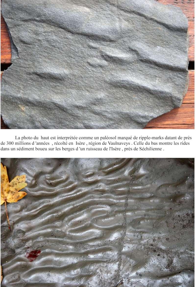 Flore Carbonifère des Alpes Françaises part 1 - Page 2 Paleos10