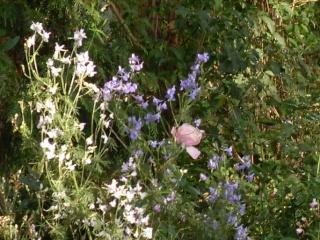 Fleurs d'automne - Page 3 Sdc19913