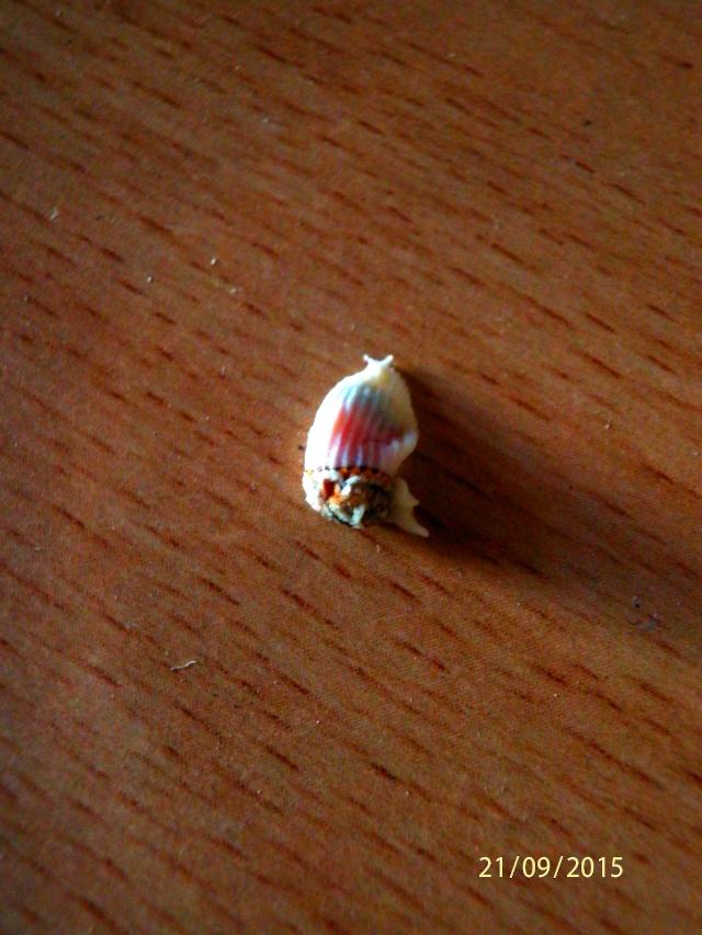Bestiole sur mon mini rosier Bestio11