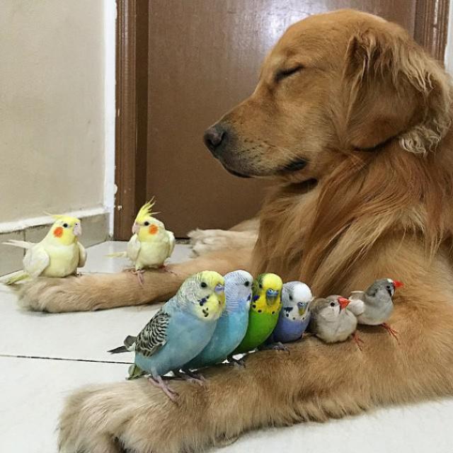 Bob et ses amis 58325510