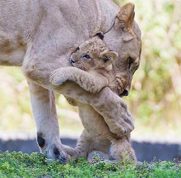 Les mamans et leur bébé - Page 26 63938_10