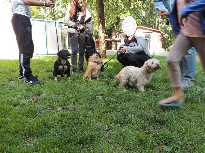 Katie, Mimi, Balto, Choupa et Chance. Dimanc37