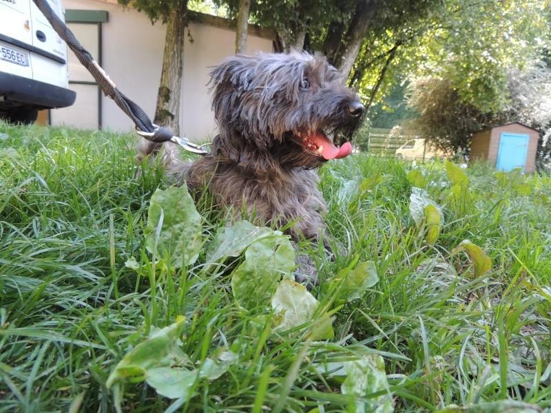 GASPAR chien Mercre26