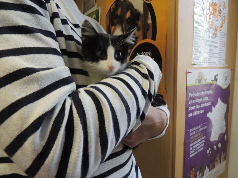 Adoption de LILA - 12 octobre 2015. Mercre50