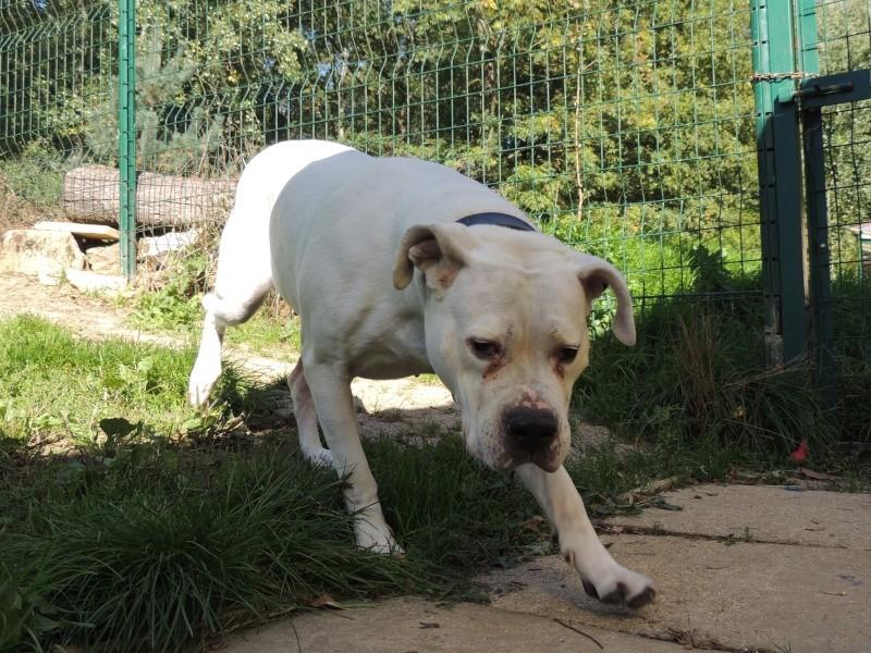 KAYA Femelle DOG ARGENTIN Merdre10