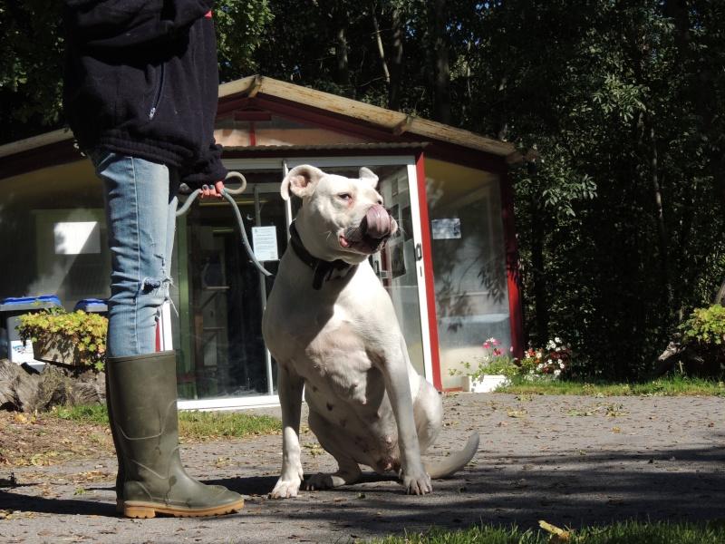 KAYA Femelle DOG ARGENTIN Merdre12