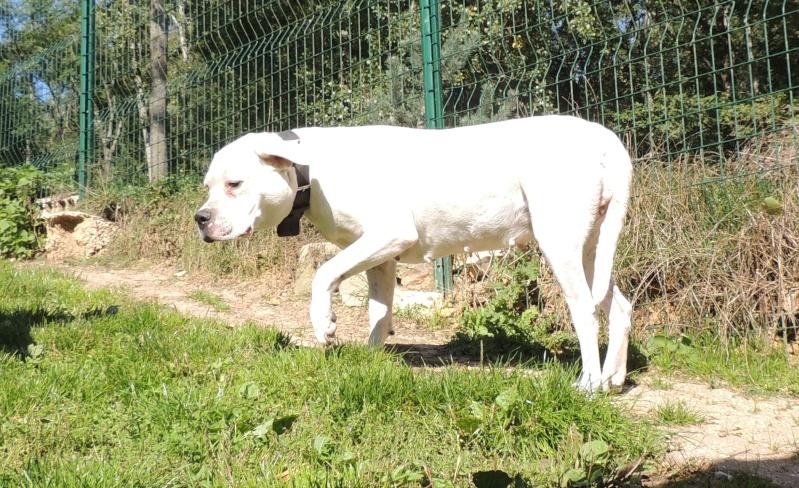 KAYA Femelle DOG ARGENTIN Merdre13