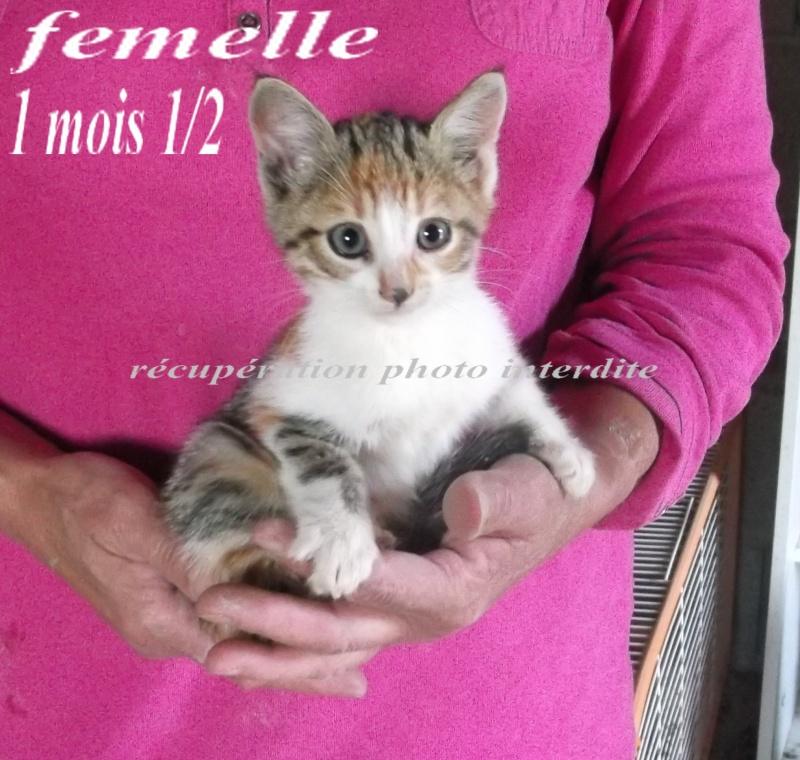 Chatte et ses 2 chatons mâle et femelle  ± 1 m 1/2 - Fourrière Sud 44 - Délai légal 07/10/2015 2f14