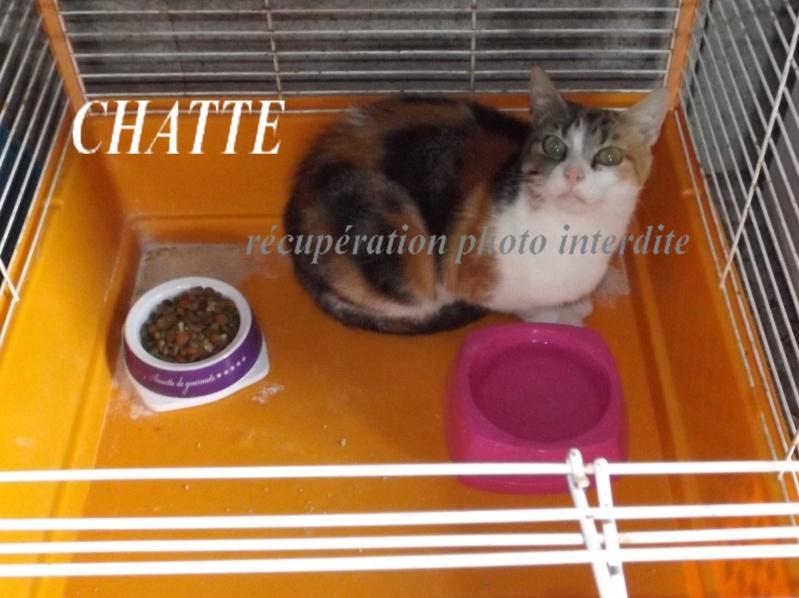 chatte adulte tricolore - Fourrière Sud 44 - Délai 24/09/2015 3f12