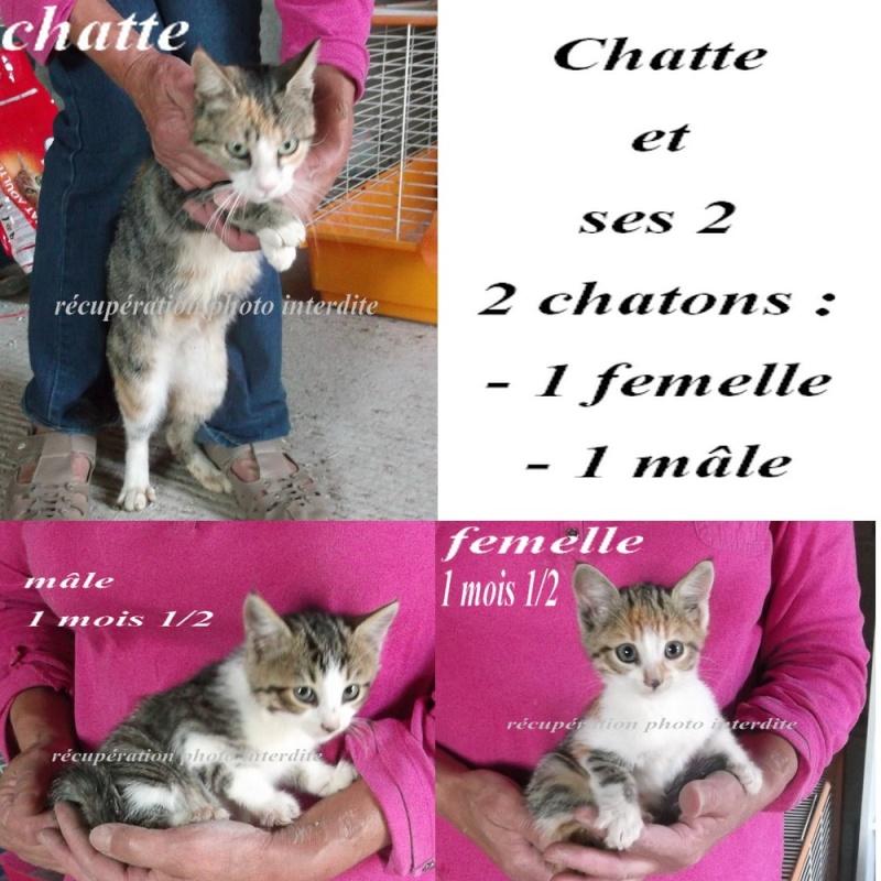 Chatte et ses 2 chatons mâle et femelle  ± 1 m 1/2 - Fourrière Sud 44 - Délai légal 07/10/2015 411