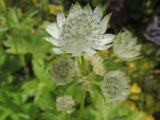 Les plantes des ami(e)s Dscn3310