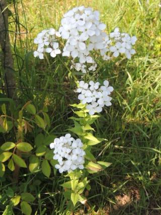 Les plantes des ami(e)s Dscn6711