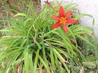 Les plantes des ami(e)s Dscn8714