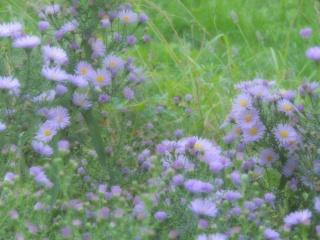 Les plantes des ami(e)s Dscn9318