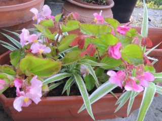 Les plantes des ami(e)s Dscn9319