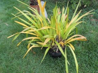 Les plantes des ami(e)s Dscn9321