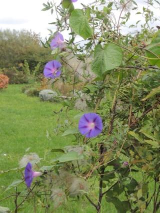Les plantes des ami(e)s Dscn9421