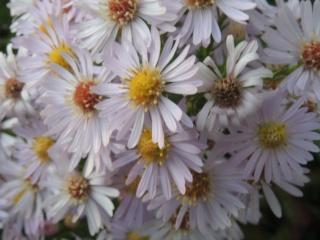 Les plantes des ami(e)s Dscn9426