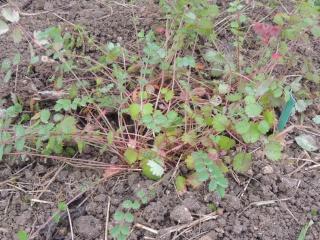 Les plantes des ami(e)s Dscn9427