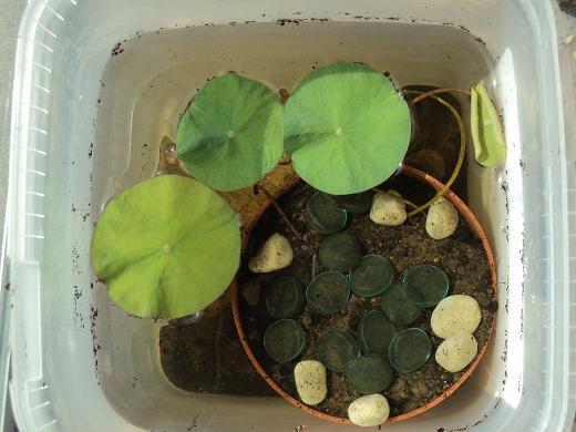 Lotus Nature et Découvertes Dsc02012