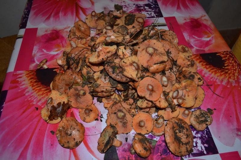 loisir les champignons !! - Page 16 Dsc_0017