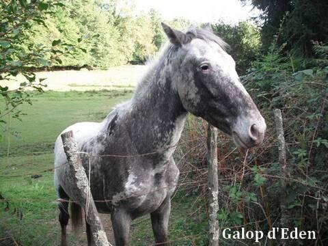 87 Tino Joli Poulain Type Appaloosa A Adopter
