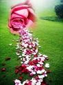 Garde le milieu du chemin de la vérité et de l'intégrité ce sera pour toi le plus sûr _5782420