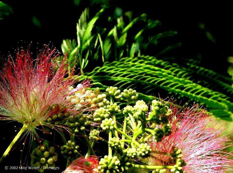 un arbuste à découvrir - ajonc - 17 septembre trouvé par Martin Albizz10