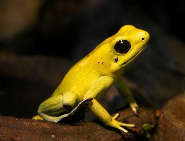 un animal - ajonc - 3 novembre trouvé par Pitchoune Grenou11