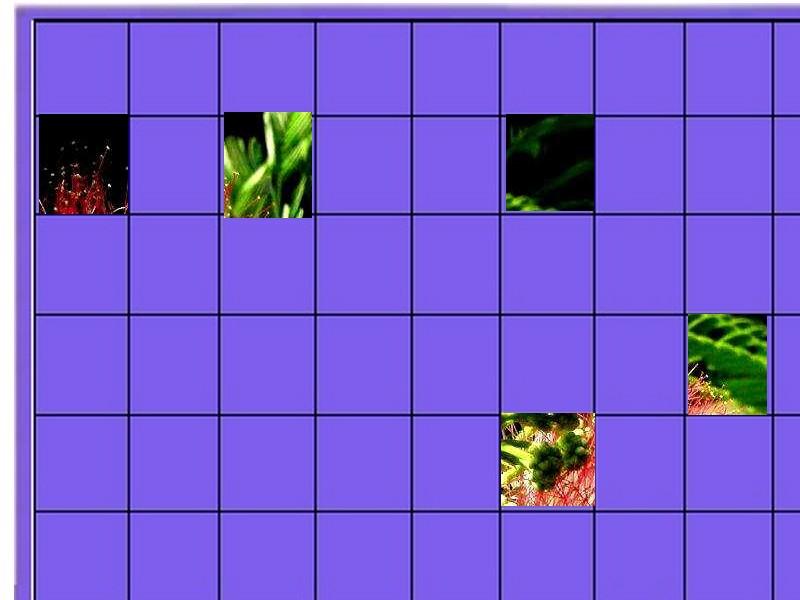 un arbuste à découvrir - ajonc - 17 septembre trouvé par Martin Un_arb10