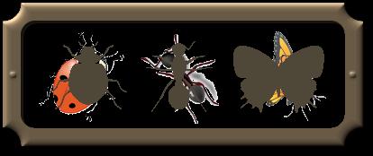 Echange d'insectes - insect exchange