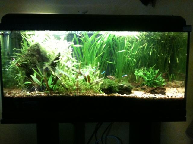 Mes aquariums - Page 8 Img_0212