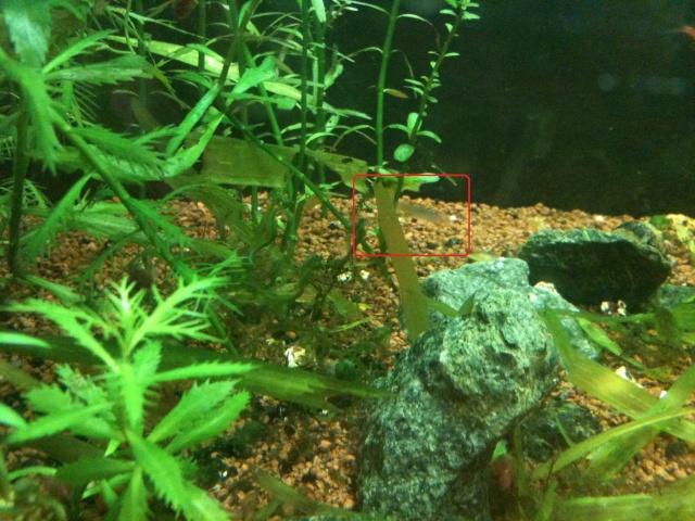 Mes aquariums - Page 8 Img_0217