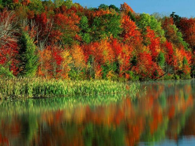 l'automne 73838010