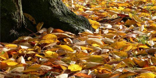 l'automne 96277110