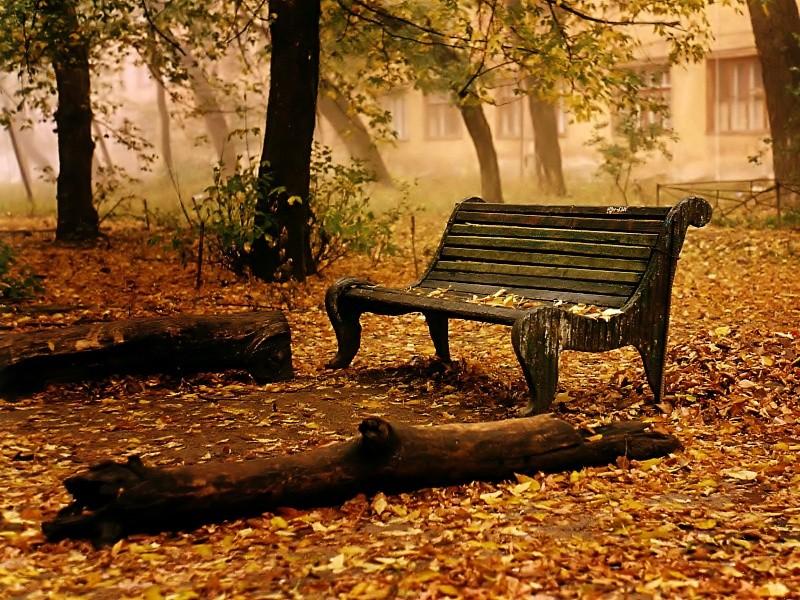 l'automne Automn11
