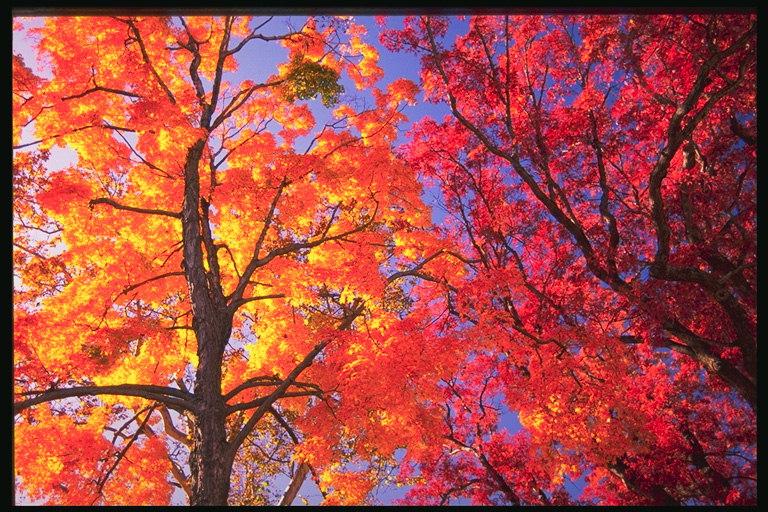 l'automne B-482010
