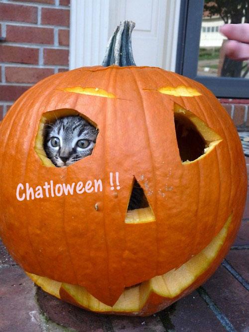 Halloween  2015 - Page 2 Dgdfge10