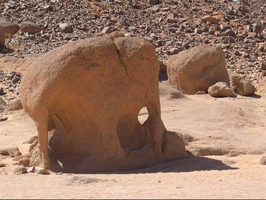 L'incroyable pachydermité du désert - Sahara - Algérie 2015-012