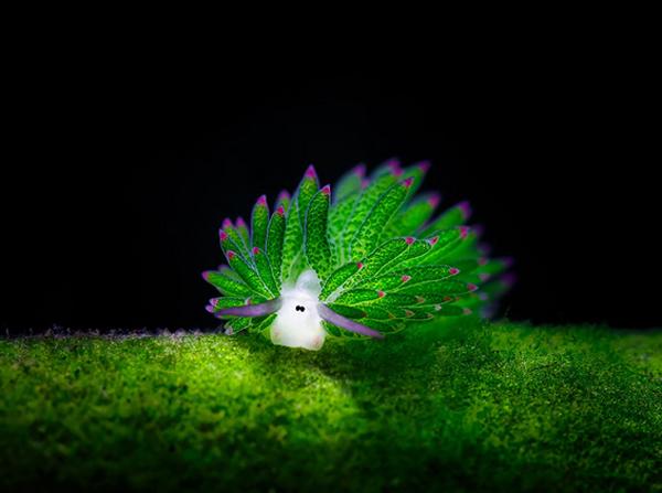Những loài sên biển đẹp ngỡ ngàng Dong1-10
