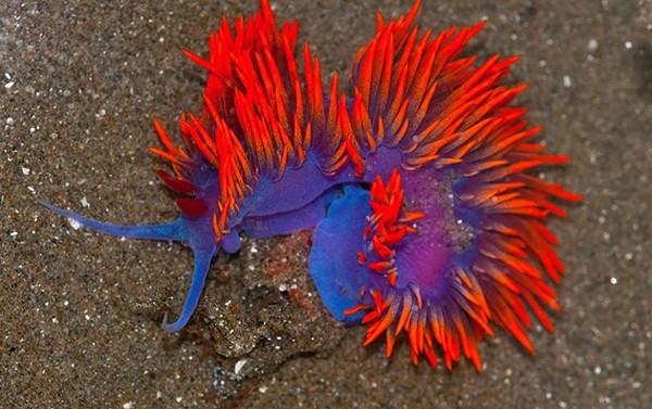 Những loài sên biển đẹp ngỡ ngàng Dong1110